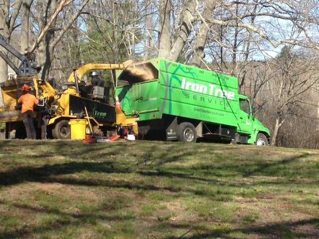Starting Up A Tree Service Business