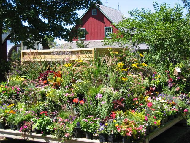 Going Green Involves A Home Garden