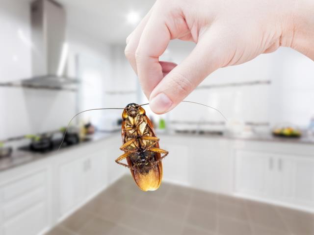 Does Organic Pest Control Work?